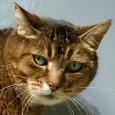 16 месеца затвор за варненец, убил котка
