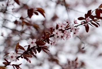 Lazito | Стръкче пролет | 29 харесвания