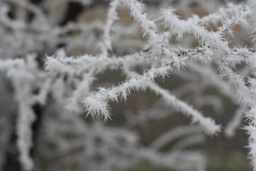 Никол Маджарова12 | Красотата на зимата | 180 харесвания