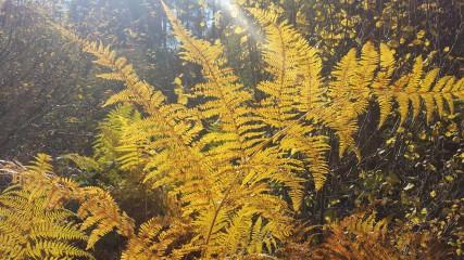 Tsanev@dir.bg | Късна есен | 5 харесвания