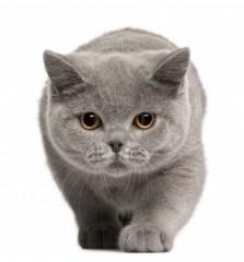 Vehtiya   Котка / Cat   2 харесвания