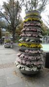 Madam Tulip | цветни кули | 8 харесвания
