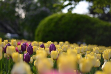 SYStemata | Пролет | 32 харесвания