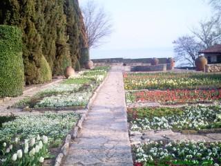 Баба Яга и седемте джуджета | Ботаническата градина в Балчик през пролетта! | 61 харесвания