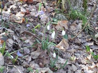 Баба Яга и седемте джуджета | Пролет в гората | 38 харесвания