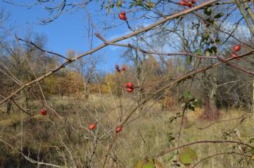 Plami99 | Плодовете на есента | 5 харесвания