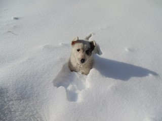Omsifan | В снега | 13 харесвания
