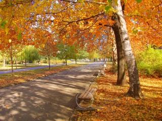 Eliana_m72@mail.bg | Есенна приказка в Монтана | 3 харесвания