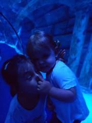Pe.miteva@abv.bg | След морето прохлада в аквариума | 5 харесвания