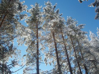 Jpeovska@abv.bg | зимно слънце | 23 харесвания