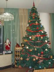 Jpeovska@abv.bg | Коледна елха | 9 харесвания