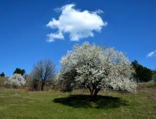 S.marchev@abv.bg | Пролетна сянка | 52 харесвания