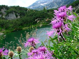 Dete_lina1@abv.bg | свежест от планината | 256 харесвания