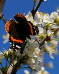 Dete_lina1@abv.bg | пеперуда | 42 харесвания
