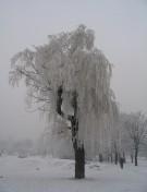 последна зима за върбата