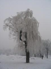 Mayamay@abv.bg | последна зима за върбата | 48 харесвания