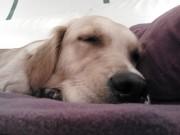 Муцуна на дивана