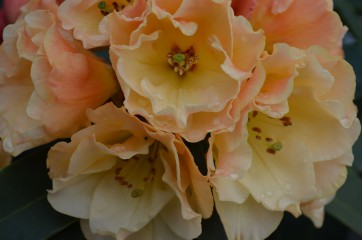 Sideris | цветя | 26 харесвания