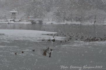 Ekaterinatg@hotmail.com | езеро Мишима, Япония | 38 харесвания