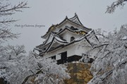 Замъкът Хиконе в Япония