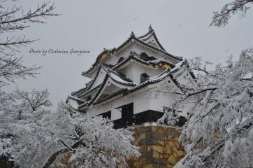 Ekaterinatg@hotmail.com | Замъкът Хиконе в Япония | 17 харесвания