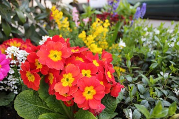Elbi10 | Цветчета | 46 харесвания
