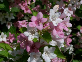 Tonitoni7 | Пролетни усмивки | 1 харесвания