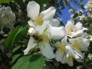 Tonitoni7 | Пролетна наслада | 3 харесвания