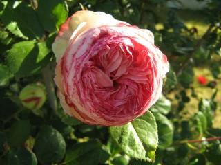 Teo13a@yahoo.com | пролет е дошла | 21 харесвания