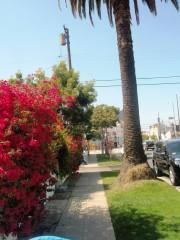 Yankapetrova@yahoo.com | пролет в Лос Анжелис | 31 харесвания
