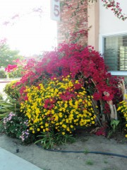 Yankapetrova@yahoo.com | пролет в Лос Анжелис | 10 харесвания