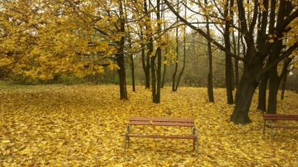 Fau1@abv.bg | Есен | 23 харесвания