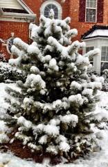ива87 | Зима | 94 харесвания