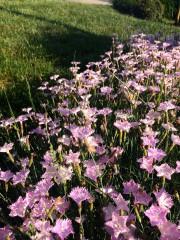ива87 | Пролет в градината на мама | 20 харесвания