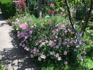 Zap Ryan | Пролетта е тук | 2 харесвания