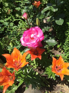 Zap Ryan | Цветя | 5 харесвания